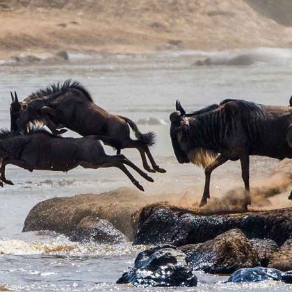 kili view and safaris The Great Wildebeest Migration Tracking Calendar