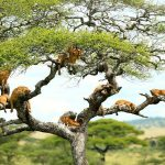 Day Tour Lake Manyara National Park