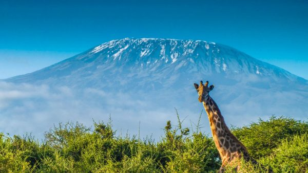 kili view and safaris|adventure & tour in tanzania