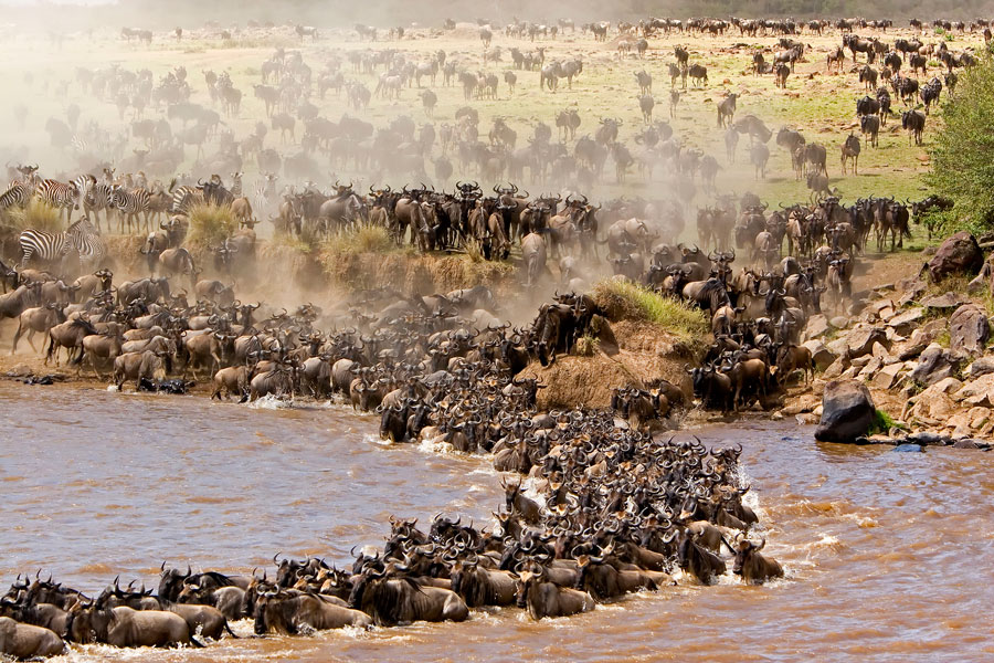 crossing-widebeest mara river 1