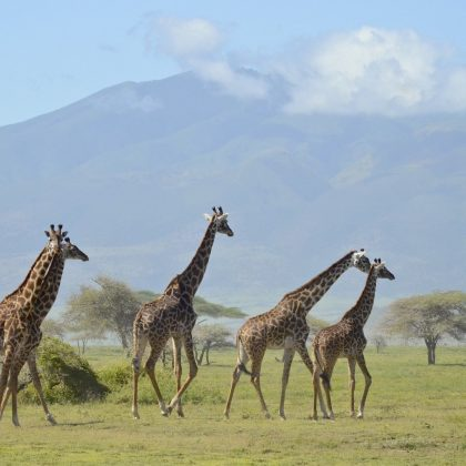 kili view and safaris arusha day tour