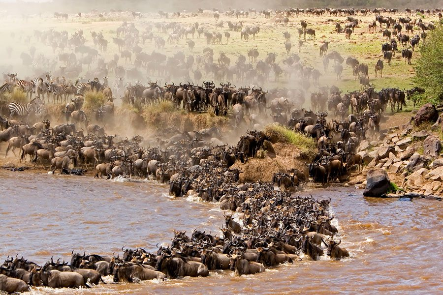 the grea migration crossing mara